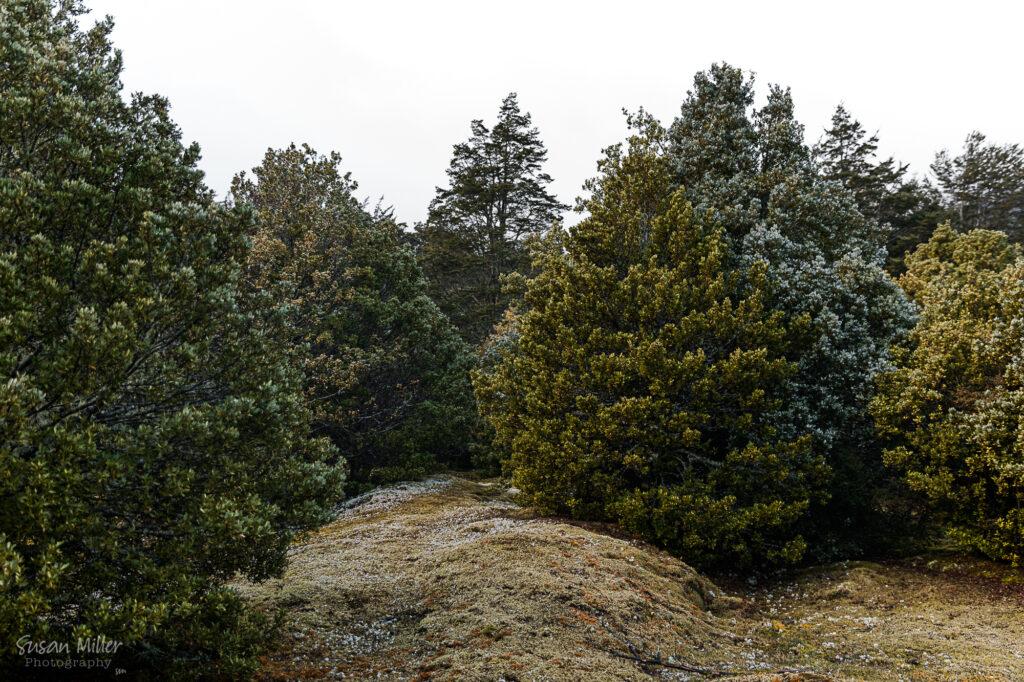 Dart Valley - Beech Forest - Susan Miller Photography